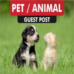 do dofollow guest post on PET blogs